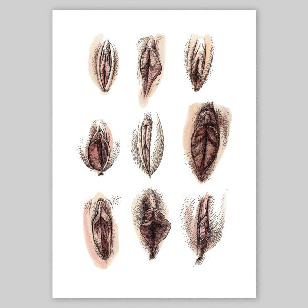 Assorted Vaginas Glicée Print by Christoph Mueller